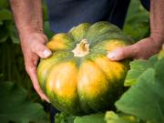 Communiqué de presse - Jardins de Pays, une marque Transgourmet Fruits et Légumes