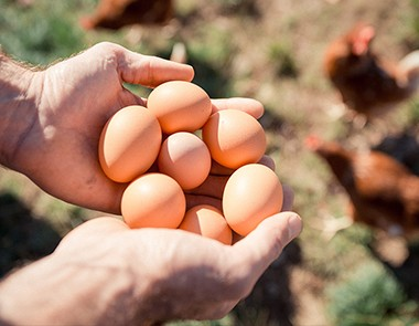Œufs bio d'Aquitaine - Transgourmet Origine