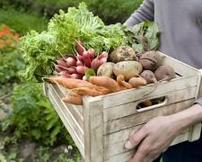 Grossiste produits bio