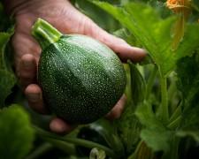 Produits locaux et régionaux - Transgourmet, grossiste alimentaire