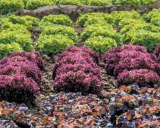 Groissiste Fruits et Légumes bruts