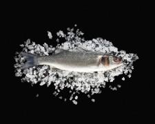 La marée - Transgourmet, grossiste poissons