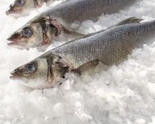 Grossiste poissons