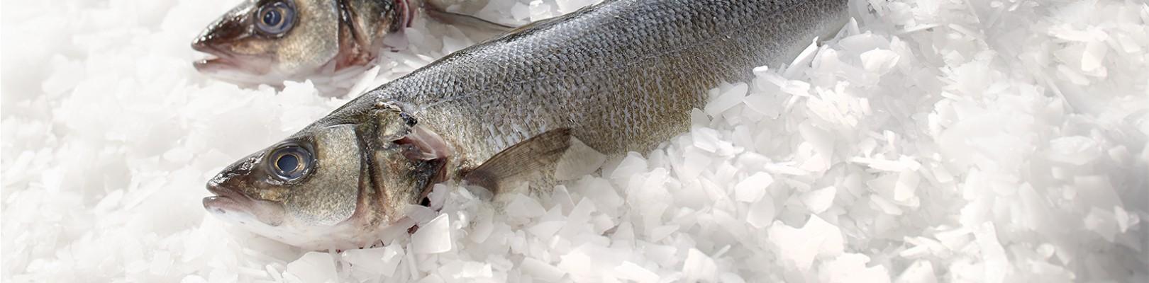 Atelier de filetage Transgourmet Seafood